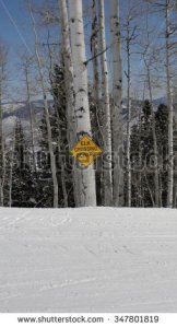 Aspen, Colorado. Image available to purchase via www.shutterstock.com